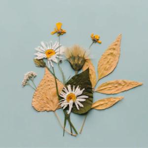 herbario flores secas para decoracion