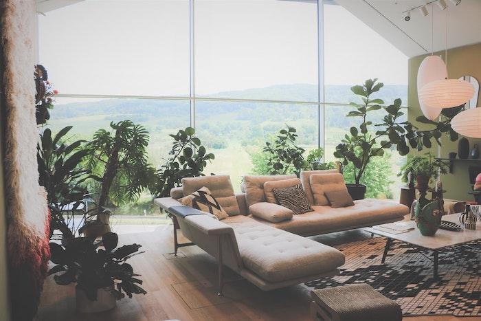 sala de estar con enormes ventana y hermosas vistas plantas de interior
