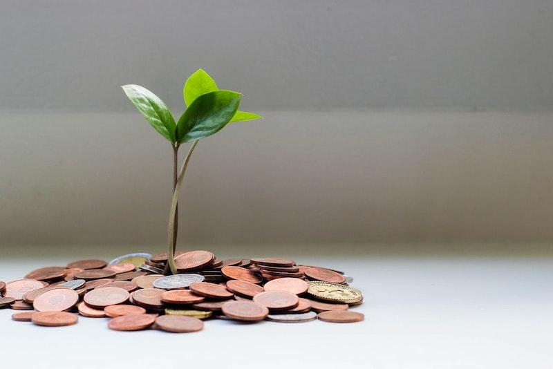 planta que crece de monedas