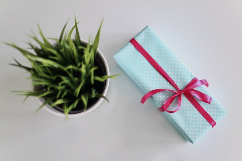 planta de interior verde con regalo con cinta roja